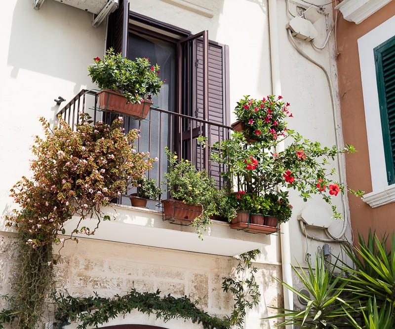 Fleurs, italie, marwan moussa, payssage, www.marwanmoussa.com